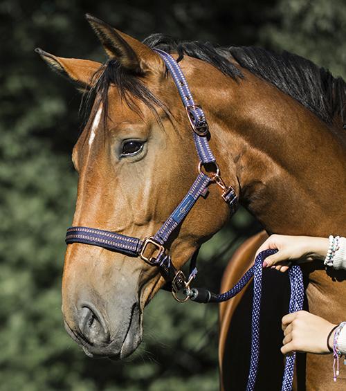 GoLeyGo Horse